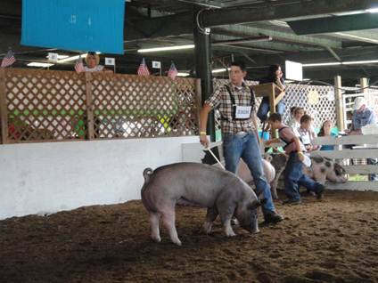 Tyrone High School student and FFA member Tanner Adams shows at the 2013 Huntingdon County Fair
