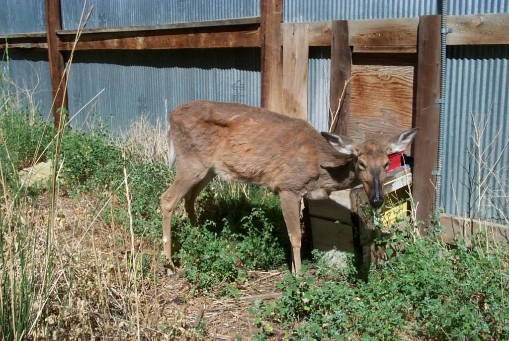 An animal with CWD