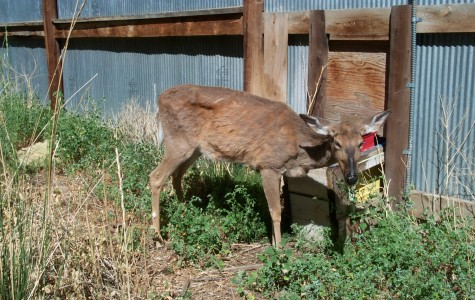 Chronic Wasting Disease a concern for local hunters and deer farmers