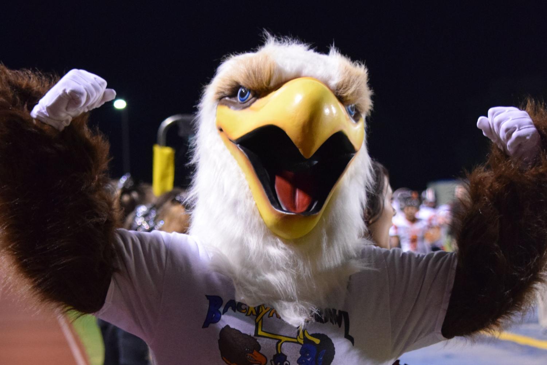 NOT a Golden Eagle