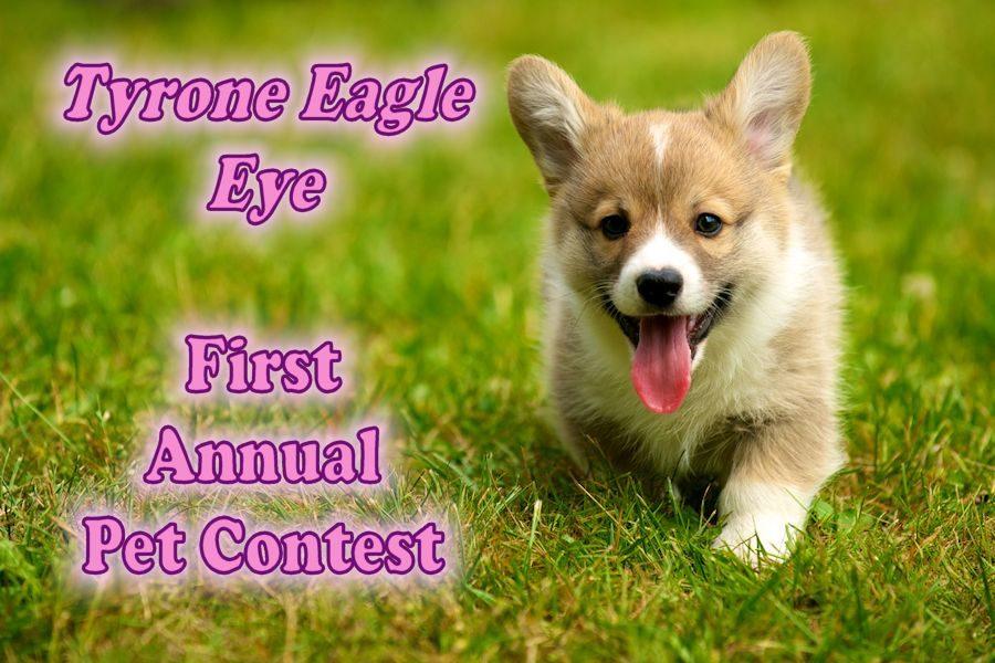 Corgi+Contest+photo