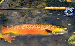 Get Hooked: Trout Season Opens on Saturday