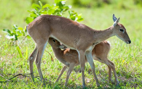 Control the Deer Population