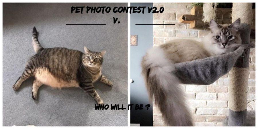 Second+Annual+Eagle+Eye+Valentine%E2%80%99s+Day+Pet+Photo+Contest