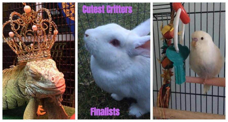 Cutest+Critters+Finalists+and+Voting