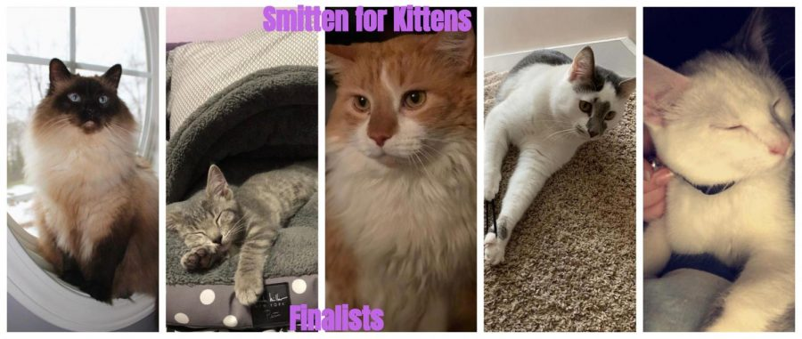 Smitten+for+Kittens+Contest+Finalist+and+Voting