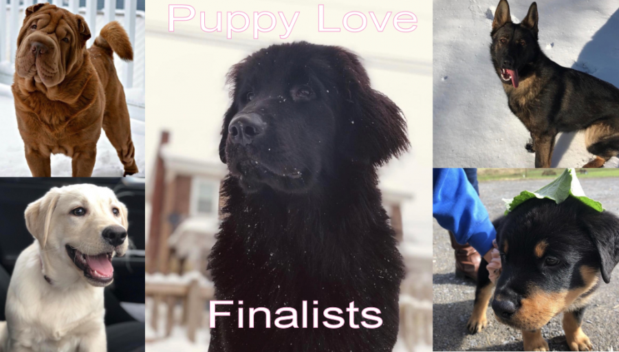 Puppy+Love+Photo+Contest+Finalists+and+Voting
