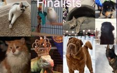 Third Annual TAHS Pet Photo Contest