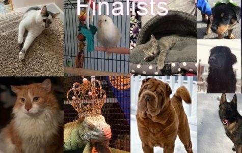 2019 second annual pet contest finalists.