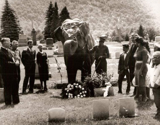 An+elephant+lays+a+wreath+on+a+tombstone+in+1958+during+a+memorial+service