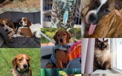 Third Annual Eagle Eye Pet Contest: Vote Now!