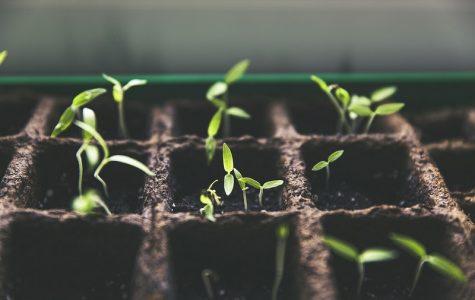 Starting pods for a garden