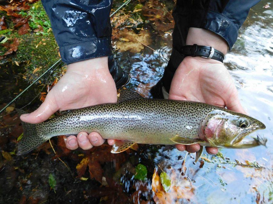PA Fish Commission Announces Changes for 2021 Trout Season
